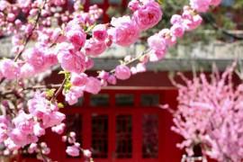 Jingyuan 3