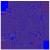 Group logo of Northwestern University
